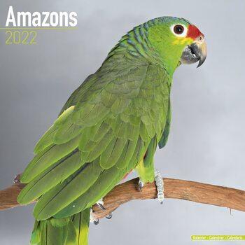 Kalendář 2022 Amazoňan