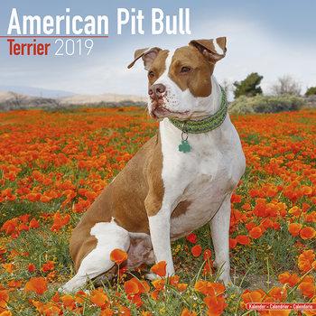 Kalendář 2019  Americký Pitbulteriér