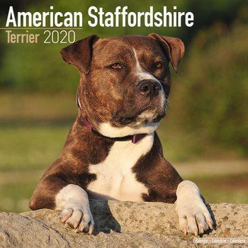 Kalendář 2020  Americký Stafordšírský teriér
