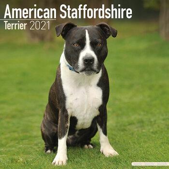 Kalendár 2021 Americký Stafordšírský teriér