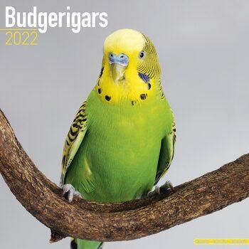 Kalendář 2022 Andulka