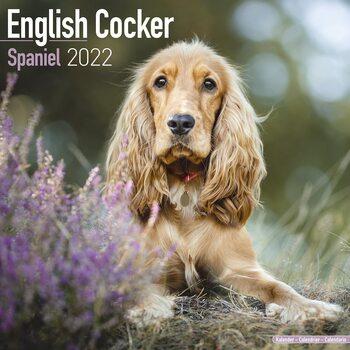 Kalendář 2022 Anglický Kokršpaněl