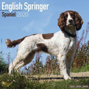 Kalendář 2020  Anglický Špringeršpaněl