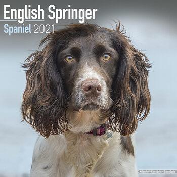 Kalendár 2021 Anglický Špringeršpaniel