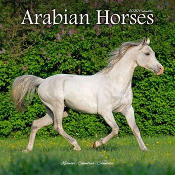 Kalendář 2020  Arabské koně