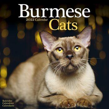Kalendář 2022 Barmská kočka