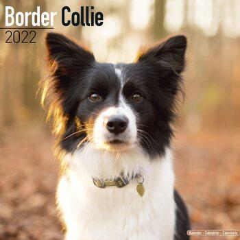 Kalendář 2022 Border kolie