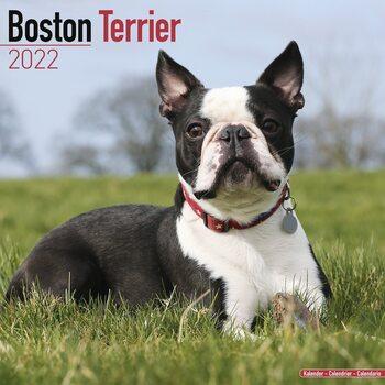 Kalendář 2022 Bostonský teriér