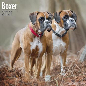 Kalendár 2021 Boxer