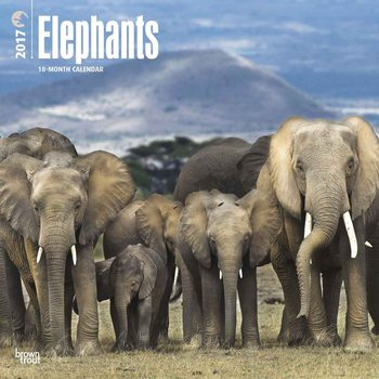 Kalendář 2017 Elephants