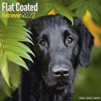 Kalendář 2022 Flat Coated Retrívr