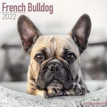Kalendář 2022 Francouzský buldoček