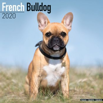Kalendář 2020  Francouzský buldoček