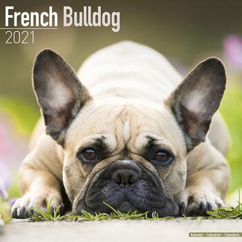 Kalendář 2021 Francouzský Buldoček