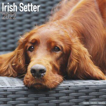 Kalendář 2022 Irský Setr