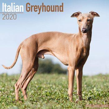Kalendář 2020  Italský Chrtík