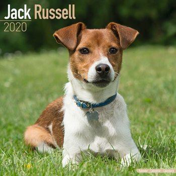 Kalendář 2020  Jack Russell
