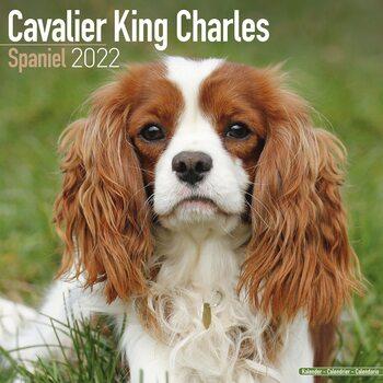 Kalendář 2022 Kavalír King Charles Španěl