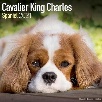 Kalendář 2021 Kavalír King Charles Španěl