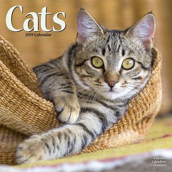 Kalendář 2019  Kočky