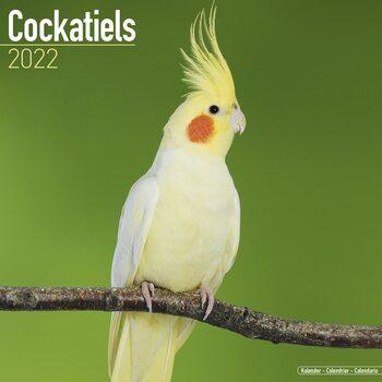 Kalendář 2022 Korela Chocholatá
