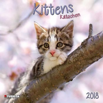 Kalendář 2018 Koťata