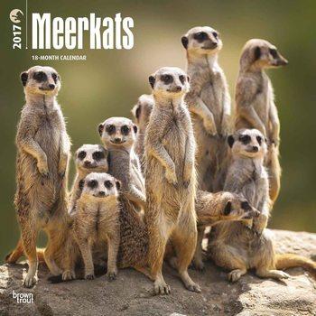 Kalendář 2017 Meerkats