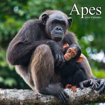 Kalendár 2020  Opice