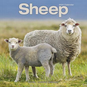 Kalendář 2021 Ovce