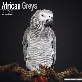 Kalendář 2022 Papoušek šedý