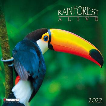 Kalendář 2022 Rainforest Alive