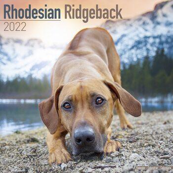 Kalendář 2022 Rhodéský Ridgeback