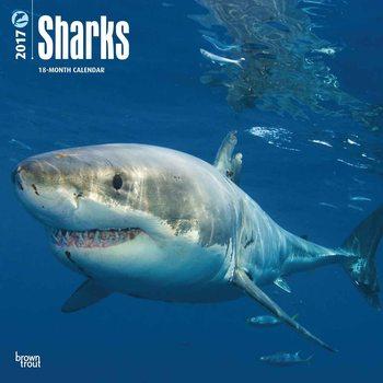 Kalendář 2017 Sharks