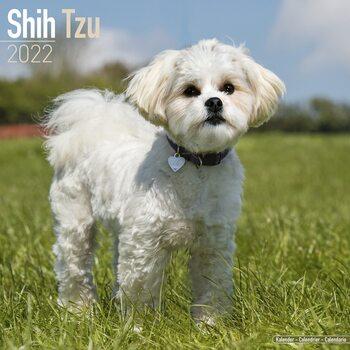 Kalendář 2022 Shih Tzu
