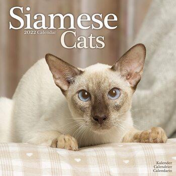 Kalendář 2022 Siamská kočka