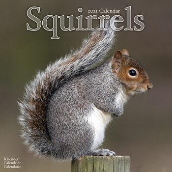 Kalendár 2021 Veveričky