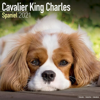 Cavalier King Charles Kalendar 2021