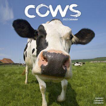 Cows Kalendar 2022