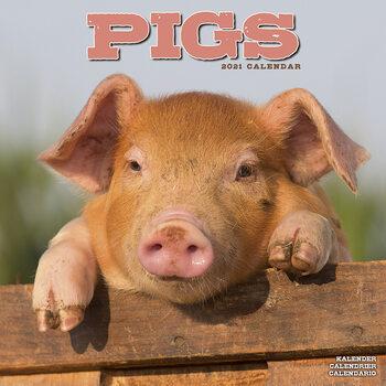 Pigs Kalendar 2021