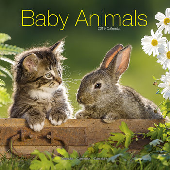 Baby Animals Kalendarz 2019