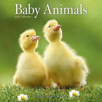 Baby Animals Kalendarz 2021