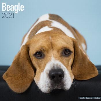 Beagle Kalendarz 2021