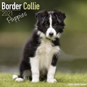 Border Collie Kalendarz 2021