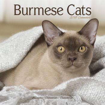 Cats - Burmese Kalendarz 2018