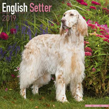 English Setter Kalendarz 2019