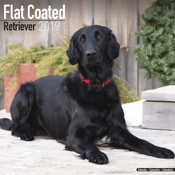 Flatcoated Retriever Kalendarz 2019