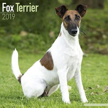 Fox Terrier Kalendarz 2019