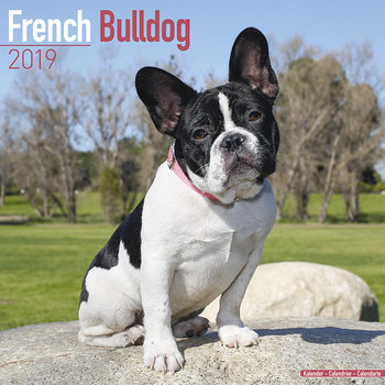 French Bulldog Kalendarz 2019