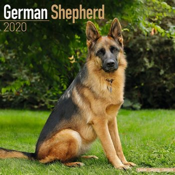 German Shepherd Kalendarz 2020