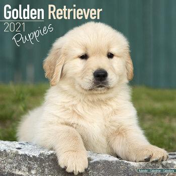 Golden Retriever Kalendarz 2021
